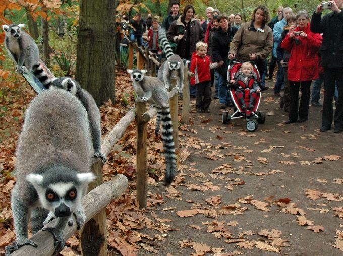 kaartjes dierentuin blijdorp